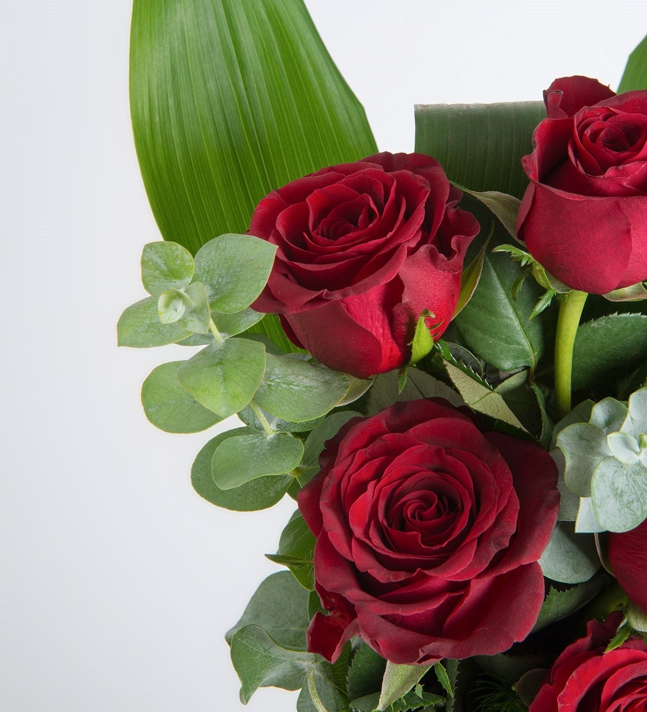 6 Rosas Rojas Pasión De Amor