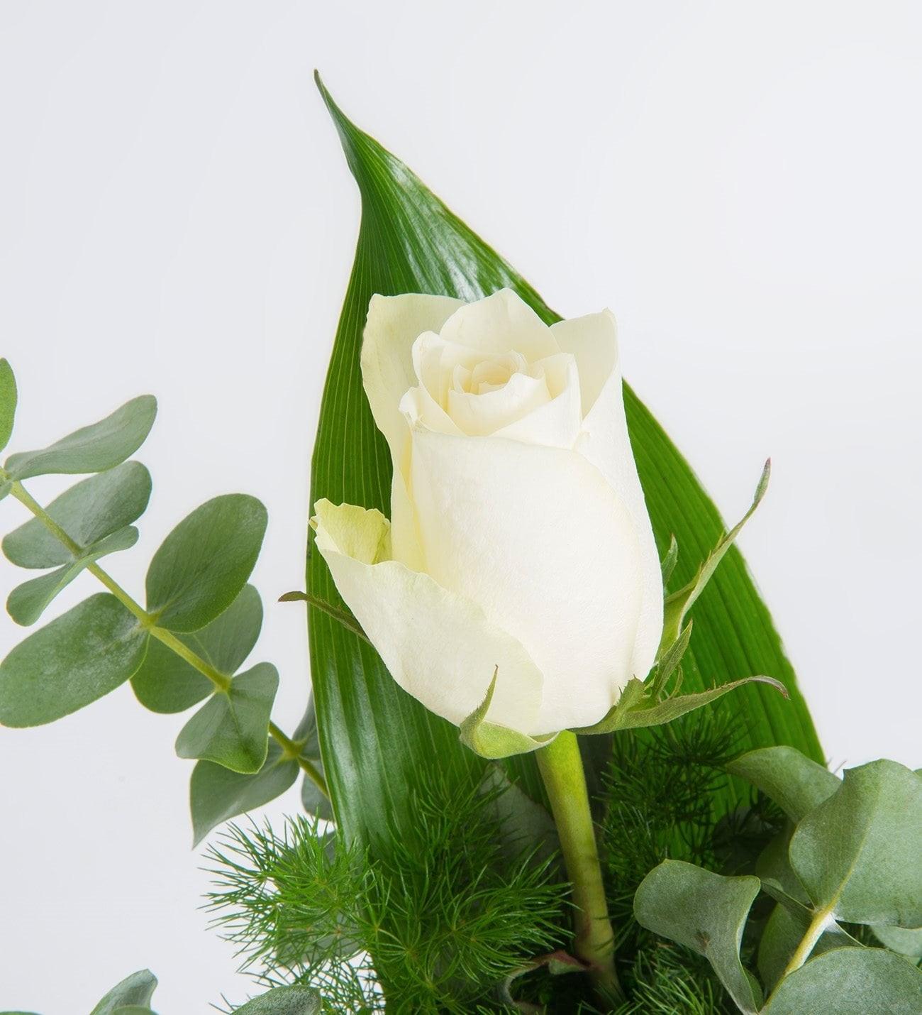 Dile Que Es única O único Con Una Rosa Blanca Lolaflora