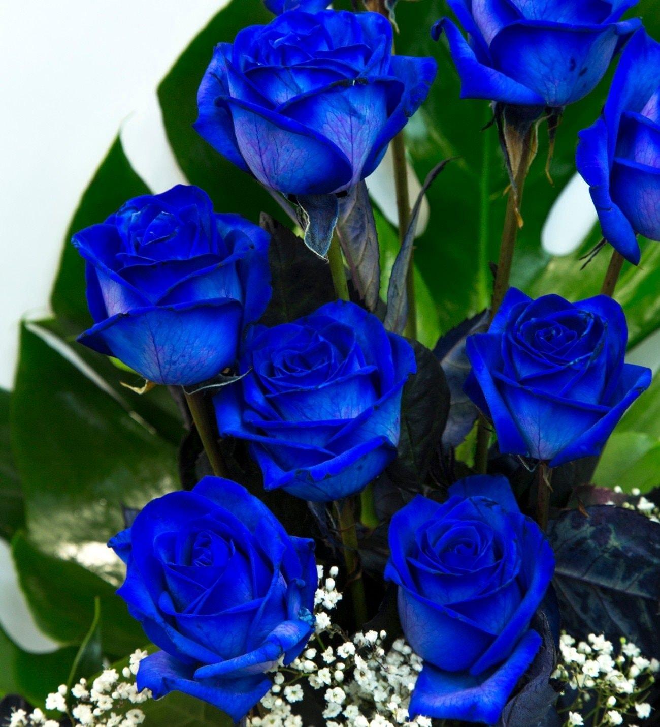 Blue Ocean 12 Blue Roses