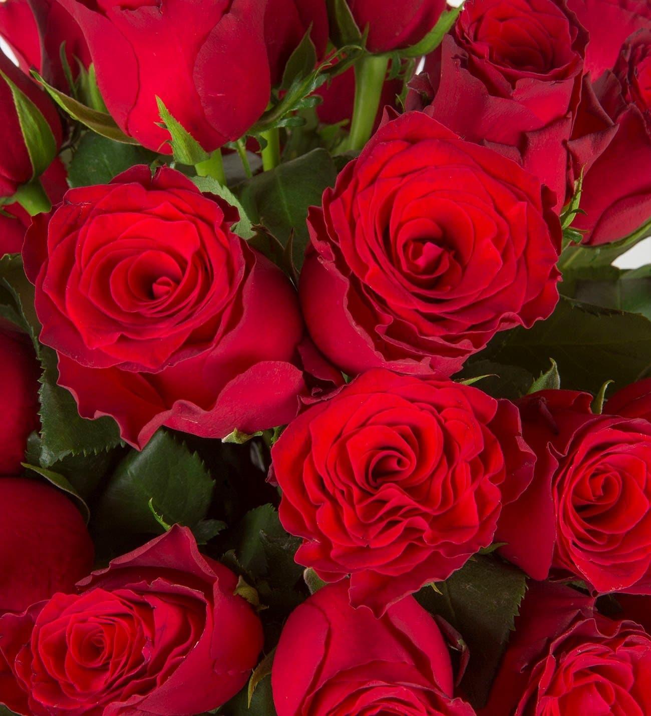 40 Rosas Rojas Tierno Amor Y Atrevimiento Lolaflora