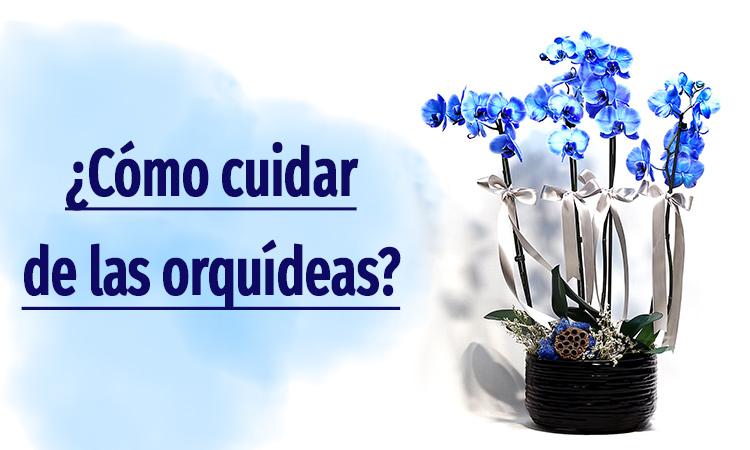 Mantenimiento de orquídeas Phalaenopsis