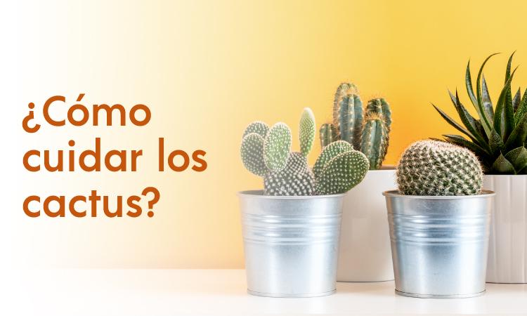 cuidado de cactus