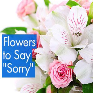 Flowers To Say Sorry Im Sorry Messages Lolaflora