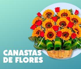 ofertas en flores